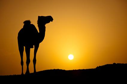 desert2.jpg (10488 bytes)