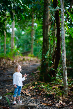 forest2.jpg (11941 bytes)