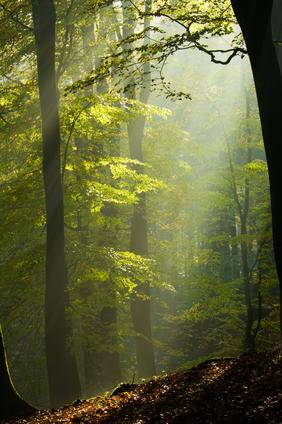 forest.jpg (12073 bytes)