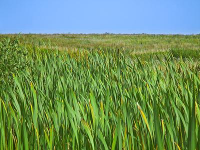 prairie.jpg (7328 bytes)