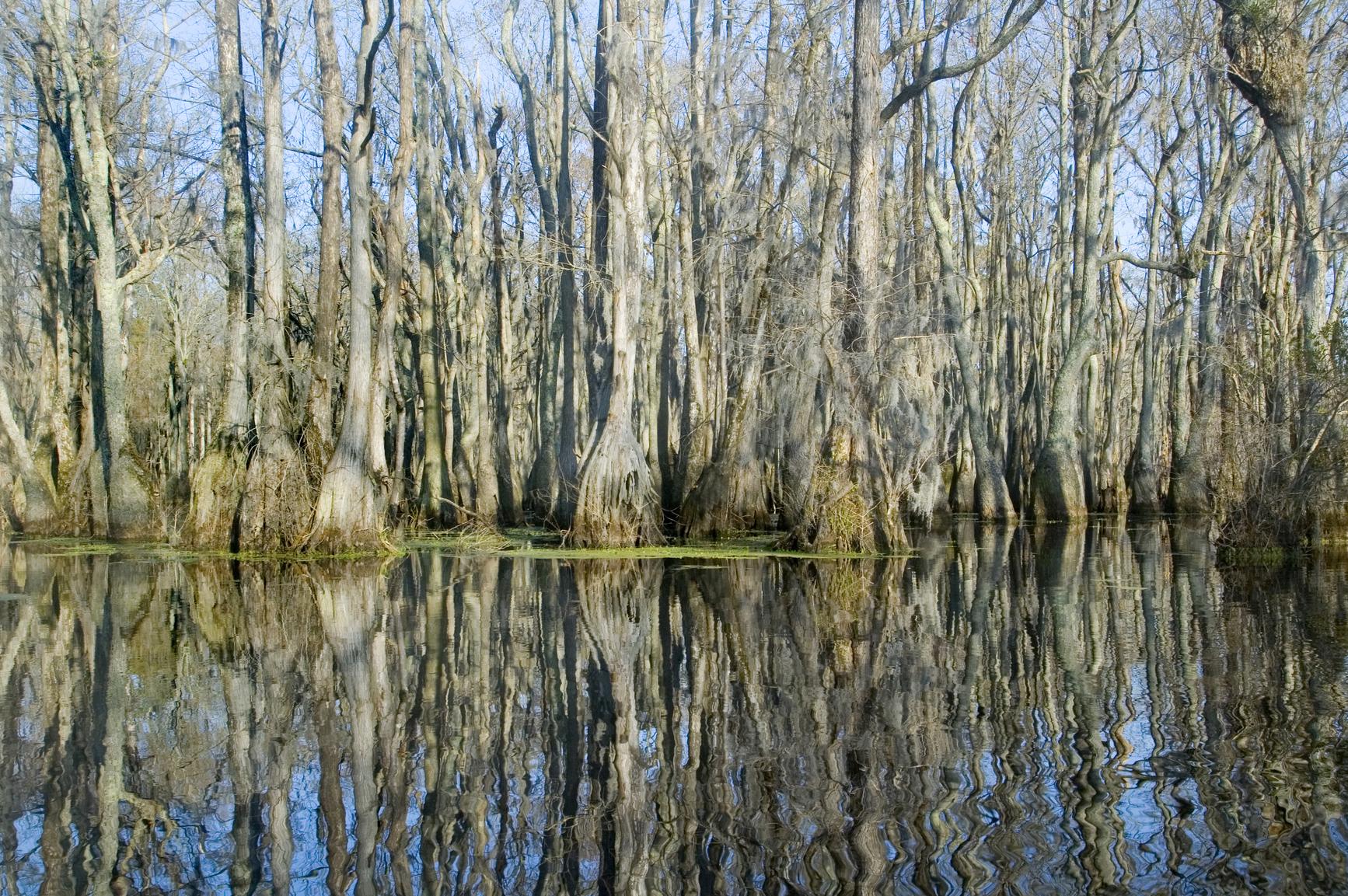 Bayou landforms bayou freerunsca Gallery